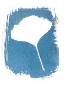Cianotipia transparente